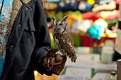 A volunteer from the Piedmont Wildlife Center holds a female screech owl while educating visitors at the N.C. State Fair on Sunday October 14th, 2012.