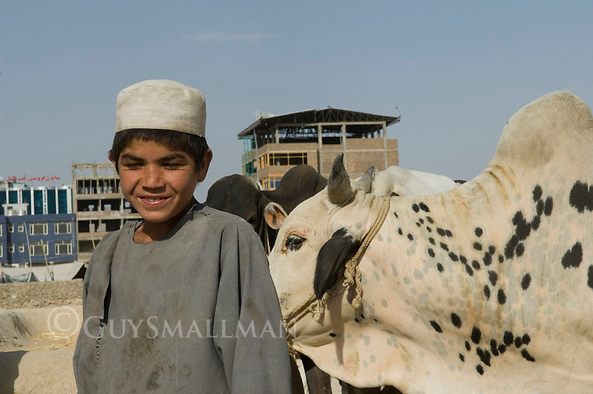 A family owned goat and cattle business run by nomadic Kochi people in district 2 of Kabul Afghanistan.