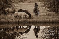 Cowboy on horseback reflecting in pond