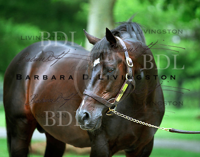 Gone West at Mill Ridge Farm, in May 2004.  Gone West won the G1 Dwyer, and G2 Gotham and Withers.  As a sire, he excelled, at Mill Ridge Farm in Kentucky.  <br /> <br /> At age 20, Mill Ridge Farm.
