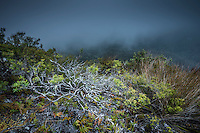 Moody scene with native vegetation on Knuckle Hill, Nelson Region, South Island, New Zealand