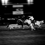 Cowboys chase down a calf during the annual rodeo and carnival on the Tohono O'odham Native American reservation in Sells, Arizona, on Saturday, Feb. 2, 2008. The rodeo has been taking place for 70 years and is the largest Indian rodeo in Arizona.
