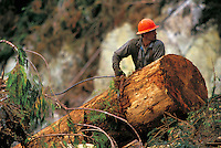 A logger in a hard hat leans against a tree trunk. Alaska.