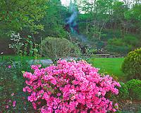 Spring Azalea Blooms, Hot Springs National Park, Arkansas