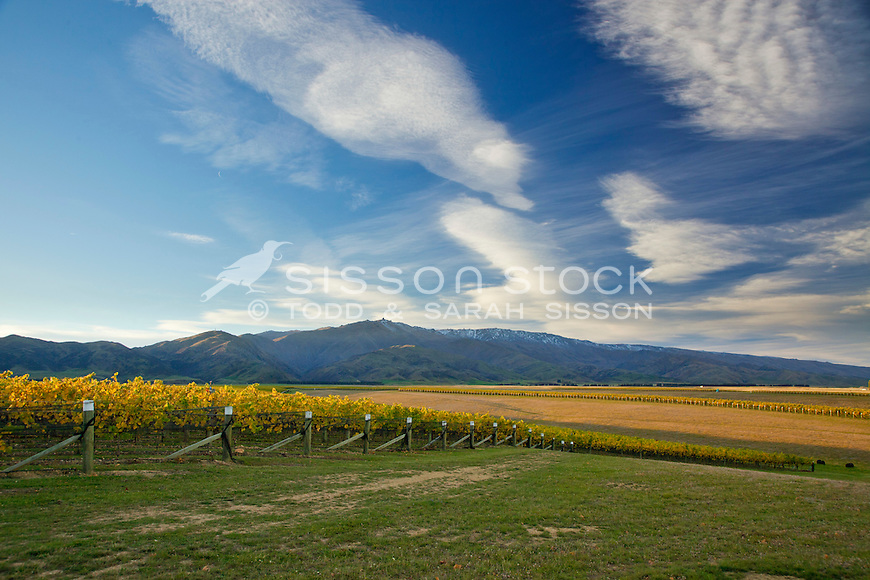 Dramatic clouds above the MacArthur Ridge vineyard in Autumn. Yellow leaves on grape vines. Looking towards Leaning Rock and the Dunstan Range.