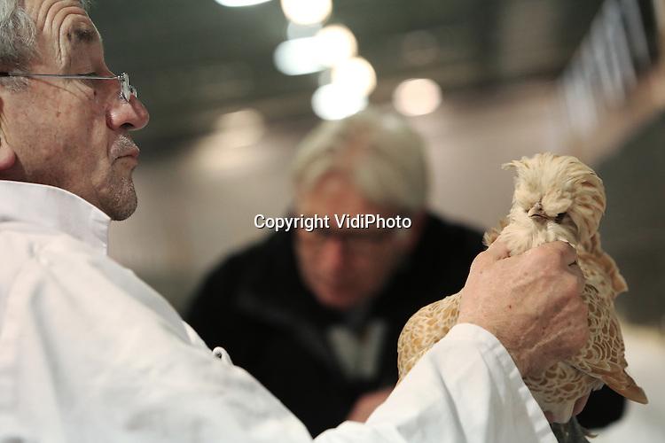 Foto: VidiPhoto<br /> <br /> NIEUWEGEIN - In de Beursfabriek in Nieuwegein is donderdag de zogenaamde Champion Show voor kleindieren als konijnen, kippen, duiven, cavia's en watervogels van start gegaan met de keuring van de dieren door zo'n 145 keurmeesters. De driedaagse Champion Show is met bij 7000 dieren de op &eacute;&eacute;n na grootste dierenshow van Nederland, met deelnemers uit heel Europa. Omdat Nederland in Europa de beste fokkers heeft, is er publieke belangstelling uit tal van landen voor het evenement. Zo komen buitenlandse fokkers speciaal naar Nieuwegein om er fokmateriaal aan te schaffen. Door de vogelgriep in 2014 zijn er dit jaar meer deelnemers dan andere jaren. Daardat 27 regionale shows vorig jaar zijn afgelast, komen fokkers met hun dieren nu naar de landelijke tentoonstelling in Nieuwegein. Bijna duizend kleindierenfokkers proberen met hun inzending landelijk kampioen te worden. Dit jaar willen de fokverenigingen proberen meer jongeren te interesseren voor deze hobby omdat het ledenbestand flink aan het vergrijzen is. Minder dierenfokkers betekent echter ook de kans op het uitsterven van bepaalde zeldzame rassen. De kleindierenshow in Nieuwegein is tot en met zaterdag geopend voor het publiek.