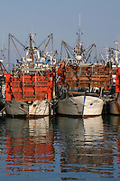 Pescherecci nel porto di Giulianova. Fishing boats in port of Giulianova....