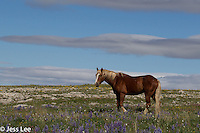 Western Wild Horse Photo Wild Horse Photography by western photographer Jess Lee. Pictures of mustangs in the West. Fine art images,Prints,photos Wild horse photo,wildhorses in the american west,