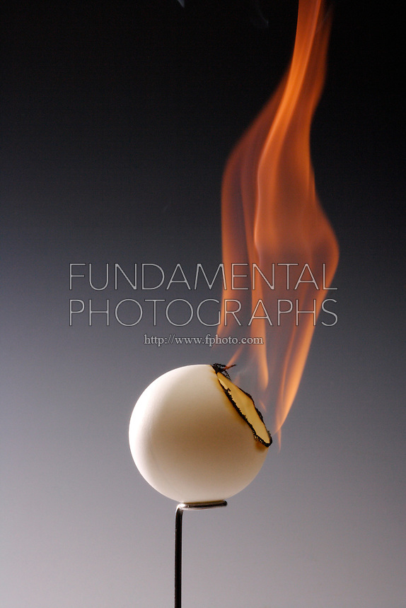 CELLULOID PING PONG BALL BURNS RAPIDLY<br /> (Variations Available)<br /> Nitrocellulose Products Are Highly Inflammable<br /> Cellulose mononitrate, cellulose dinitrate, and cellulose trinitrate are the forms of nitrocellulose, one of the first man made polymers. Because it was so unstable, camphor was added to amend the problem of detonation.