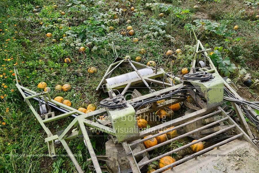 pumpkin seed oil yield