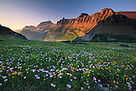 Logan Pass, Glacier National Park, Montana