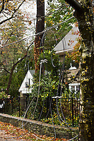A fallen tree took down powerlines in the 6400 block of Wissachickon Avenue in Mt. Airy. Workers from PECO were on the scene.
