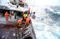 """The fishing vessel Reliance fishes for opilio crab in the Bering Sea during a storm. The Bering Sea is known for having the worst storms in the world. In this photo a deckhand has just thrown the """"hook"""" at the buoy attached by a line to the crab pot sitting on the ocean floor. He will then pull it aboard using hydrolics. Crab fishing in the Bering Sea is considered to be one of the most dangerous jobs in the world. This fishery is managed by the Alaska Department of Fish and Game and is a sustainable fishery. The Discovery Channel produced a TV series called """"The Deadliest Catch"""" which popularized this fishery."""