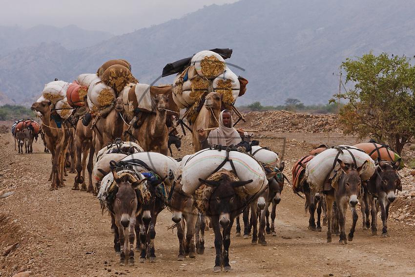 Fantastic Saharan Camel Caravan