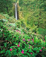 Akaka Falls & Flowers, Akaka Falls State Park, Big Island of Hawaii