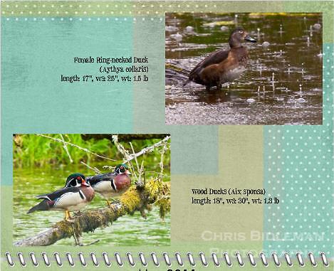 May 2011 Birds of a Feather Calendar