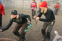 Marking the reindeer calves. Reindeer herders at Saanti Sijte, Mid-Norway..