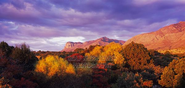 Sunrise on El Capitan and fall colors, Guadalupe Mountains National Park, Texas, USA
