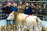 Supreme Champion Heifer, Sponored by Killiher's Mills Tralee. Pictured  Brian Walsh, Tralee Mart, Edward Kelliher (Sponsor), Presenting to   Gerard Clifford, Spa   owner (seller), Mark Collins (purchaser) for Slaney foods  at the Christmas Fat Stock and Show sale at The Kingdom Mart Tralee on Monday