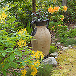 urn surounded by Exberry azaleas