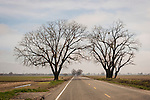 Oak tree arch over the highway, Knights Ferry, Calif.
