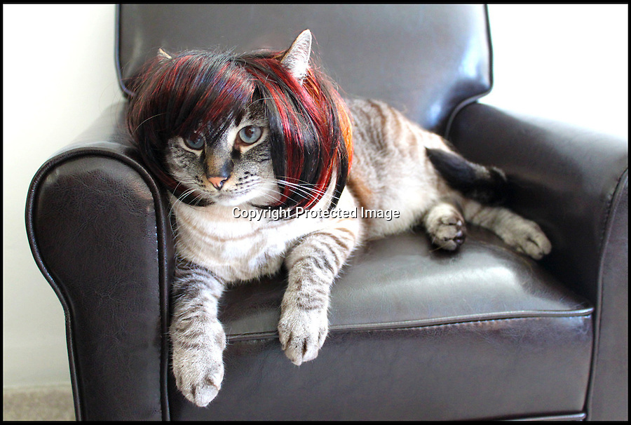 BNPS.co.uk (01202 558833)<br /> Pic: Cushzilla/BNPS<br /> <br /> ***Please use full byline***<br /> <br /> Sharon Osbourne wig.<br /> <br /> A barking-mad designer has launched a range of wigs that turn pets into pop princesses including Katy Perry, Lady Gaga, Britney Spears and even Dolly Parton.<br /> <br /> Dogs and cats can also be dressed up as dragons, pilots, wizards or Prince Charming thanks to Leah Workman's wacky creations.<br /> <br /> The 40-year-old from Los Angeles spotted the trend of dressing up pets while studying in Japan - and later teamed up with husband Hiroshi Hibino to launch company Cushzilla.<br /> <br /> The pair instantly set tails wagging around the internet with their bonkers brand of pet fashion, which also features Sharon Osbourne and Sid Vicious wigs and cow and tiger costumes.<br /> <br /> Leah imports the high quality handmade wigs while costumes come from famous Japanese pet clothing designer Takako Iwasa.<br /> <br /> She says the most popular wig is the Lady Gaga, while the pilot's outfit tops the popularity charts in the costume department.<br /> <br /> Her own cats Jitters and Justus model many of the products on the company's website.