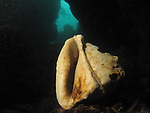 Kenting, Taiwan -- A sea shell at the bottom of an underwater crevice.