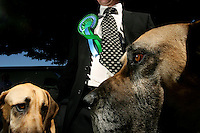 The Irish Kennel Club hosts the Crufts European Dog Show in the RDS Dublin.