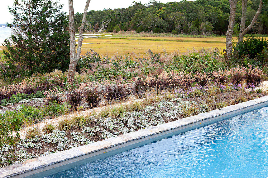 swimming pool next to greenery garden