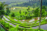Bali, Tabanan, Jatiluwih. At 700m altitude, with beatiful terraced paddy fields. Rice terraces in the afternoon sun.