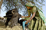 Rooro Jhabi provides feed to her water buffalo, which she bought with a loan from the Lower Sindh River Development Association (LSRDA) in southern Pakistan. LSRDA has worked throughout the area providing education, credit, and empowerment to vulnerable groups often living in virtual slavery to large landowners. By providing credit to women like Rooro Jhabi, the organization allows them to earn and save money which is usually invested in better food and the education of their daughters.