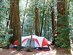 Tent in campground at Big Basin Redwoods State Park