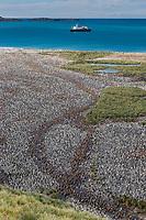 Salisbury Plain, South Georgia Island
