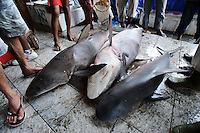 Sharks for sale at Paotere fish market, Makassar, Sulawesi, Indonesia.
