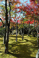 Dramatic outdoor scenery of Japanese Garden surrounded by red foliage trees. Nature landscape fine art photography by Paul Chong.