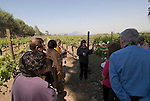 Chile Wine Country: Tour group at Concha y Toro Winery, Vina Concha y Toro, near Santiago..Photo #: ch458-33796..Photo copyright Lee Foster, 510-549-2202, www.fostertravel.com, lee@fostertravel.com.