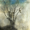 Woman in dead tree. Photo based mixed medium art.