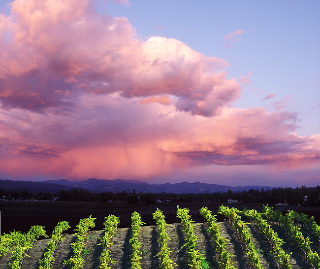 Storm clouds over vineyard