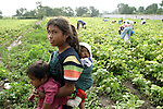 Native girl cradles her brothers as her family harvests beans in a land of Progreso, in northern state of Hidalgo. Photo by Heriberto Rodriguez