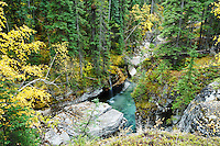 Autumn color, Maligne Canyon, Jasper National Park