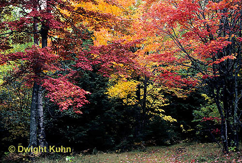 KN07-002a  Forest - autumn, Mt. Kineo, Maine
