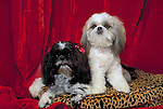 Shih-Tzu in the studio Shopping cart has 3 Tabs:<br />
