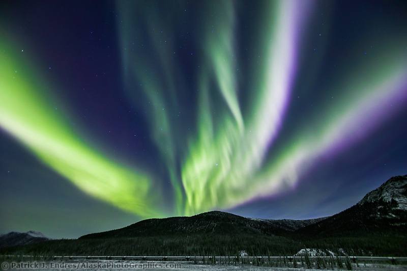 Northern lights swirl over spruce trees and Trans Alaska oil pipeline in the Brooks range mountains, arctic, Alaska.
