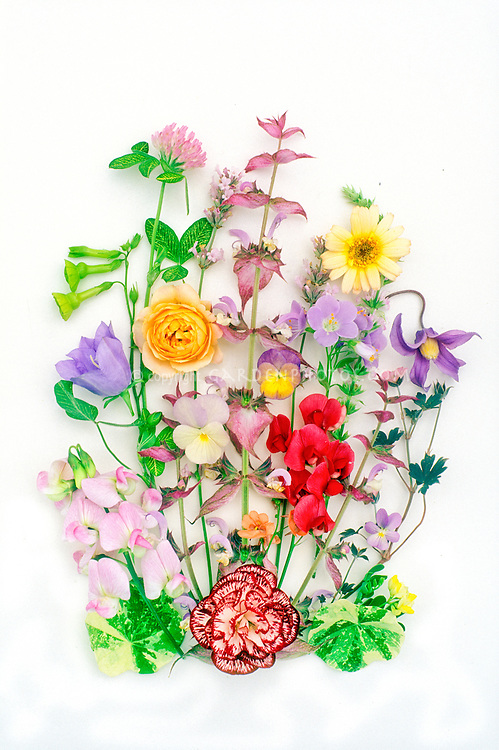 Scans of cut flower arrangements on white backgrounds, spring flowers
