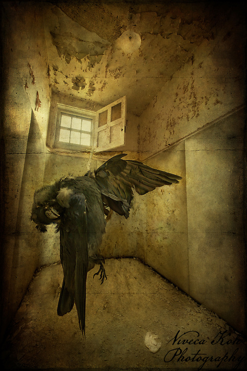 Padded cell at West Park Asylum, with dead bird
