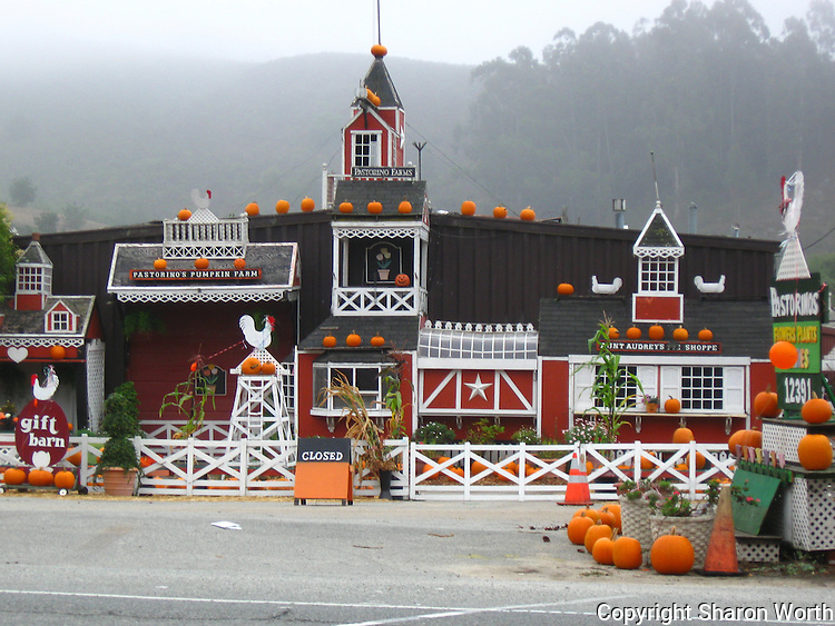 Fog hovers overhead while carefully placed pumpkins announce Halloween.