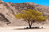 Fustat + Desert
