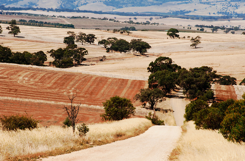 A gravel road cuts through the golden farmland of the Adelaide hills leading into the Barossa Valley, South Australia.