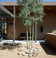 A young tree has been planted in a courtyard that is enclosed by a covered terrace