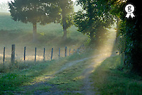 Sunrise penetrating trees on path, morning (Licence this image exclusively with Getty: http://www.gettyimages.com/detail/97580223 )